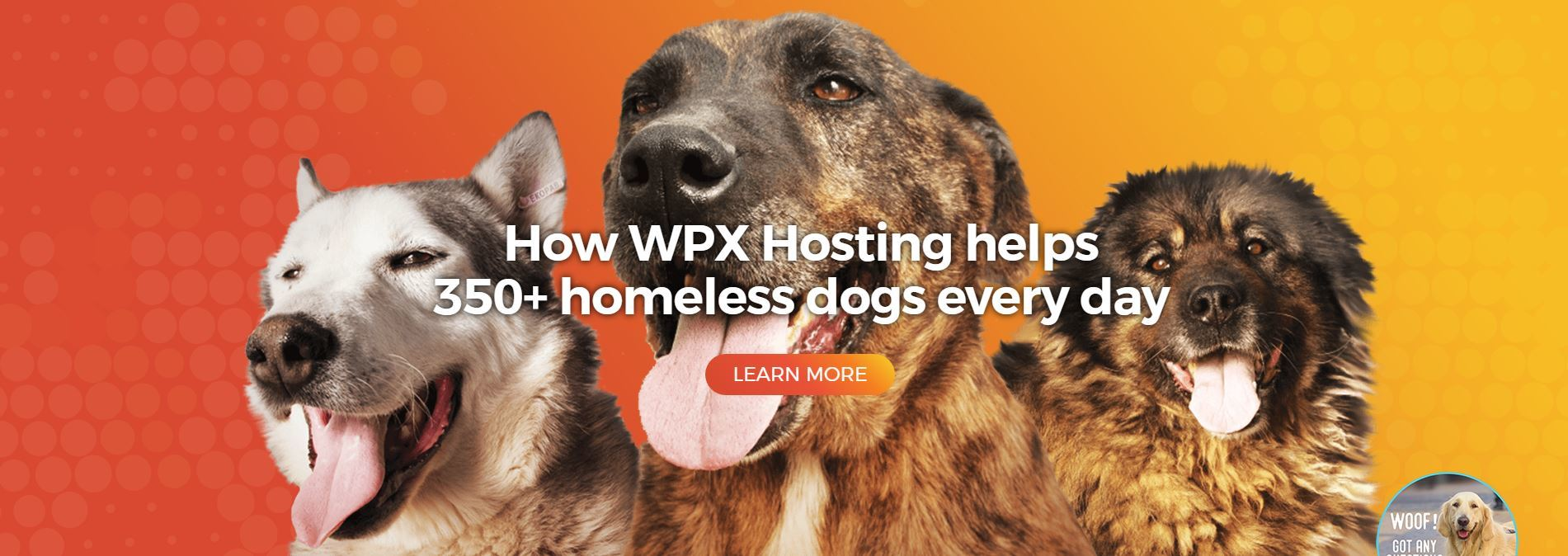 WPX Hosting Review - Dogs